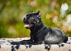 Άγρια σκυλιά κατασπάραξαν ολόκληρο κοπάδι αιγοπροβάτων στην Αργολίδα (βίντεο - σκληρές εικόνες) - Κυρίως Φωτογραφία - Gallery - Video