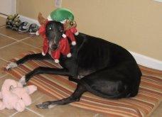 Αξιολάτρευτα σκυλάκια ντύθηκαν Αη Βασίληδες ή Ρούντολφ  - Απλά θα τα λατρέψετε!  - Κυρίως Φωτογραφία - Gallery - Video 2