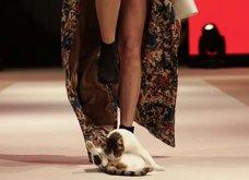 """Γάτα """"εισέβαλε"""" σε fashion show και έδειξε στα μοντέλα πως να... περπατούν σωστά! - Κυρίως Φωτογραφία - Gallery - Video"""