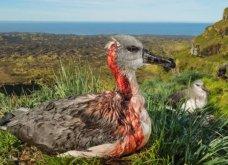 Οι καλύτερες φωτογραφίες του national geographic για το 2018  - Από την άγρια φύση έως τον Ατλαντικό ωκεανό - Κυρίως Φωτογραφία - Gallery - Video 11