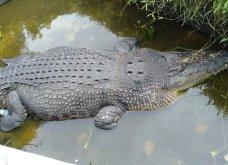 Τραγικό περιστατικό: Κροκόδειλος στην Ινδονησία έφαγε την επιστήμονα που τον τάιζε - Κυρίως Φωτογραφία - Gallery - Video