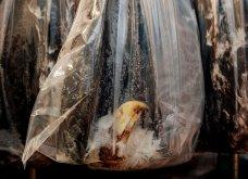 Οι 30 πιο συγκινητικές φωτογραφίες της χρονιάς από το National Geographic  - Κυρίως Φωτογραφία - Gallery - Video 21