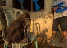 Οι 30 πιο συγκινητικές φωτογραφίες της χρονιάς από το National Geographic  - Κυρίως Φωτογραφία - Gallery - Video 23