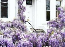 Καλλιτέχνιδα καταγράφει τις πιο όμορφες μπροστινές πόρτες του Λονδίνου: Υπέροχα λουλούδια & χρώματα - Φώτο  - Κυρίως Φωτογραφία - Gallery - Video 10