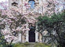 Καλλιτέχνιδα καταγράφει τις πιο όμορφες μπροστινές πόρτες του Λονδίνου: Υπέροχα λουλούδια & χρώματα - Φώτο  - Κυρίως Φωτογραφία - Gallery - Video 12