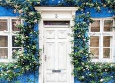 Καλλιτέχνιδα καταγράφει τις πιο όμορφες μπροστινές πόρτες του Λονδίνου: Υπέροχα λουλούδια & χρώματα - Φώτο  - Κυρίως Φωτογραφία - Gallery - Video 22