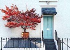 Καλλιτέχνιδα καταγράφει τις πιο όμορφες μπροστινές πόρτες του Λονδίνου: Υπέροχα λουλούδια & χρώματα - Φώτο  - Κυρίως Φωτογραφία - Gallery - Video 31