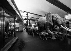 «Hakuna Matata»: 30 υπέροχες ψηφιακές φωτογραφίες δείχνουν πως συμπεριφέρονται τα ζώα ... όταν οι άνθρωποι δεν κοιτάζουν  & θα σας φτιάξουν τη μέρα (φώτο) - Κυρίως Φωτογραφία - Gallery - Video