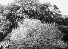 O Κριστιάν Λουμπουτέν μένει εδώ! - Σε πύργο της Γαλλίας με τόσο ωραίο κήπο που παίρνει βραβείο (φώτο) - Κυρίως Φωτογραφία - Gallery - Video 4