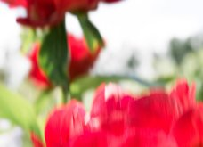 O Κριστιάν Λουμπουτέν μένει εδώ! - Σε πύργο της Γαλλίας με τόσο ωραίο κήπο που παίρνει βραβείο (φώτο) - Κυρίως Φωτογραφία - Gallery - Video 9