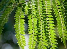 Φωτογράφος δημιούργησε ένα μοναδικό project με εικόνες κήπου που θα λατρέψετε!   - Κυρίως Φωτογραφία - Gallery - Video 5