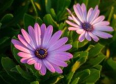 Φωτογράφος δημιούργησε ένα μοναδικό project με εικόνες κήπου που θα λατρέψετε!   - Κυρίως Φωτογραφία - Gallery - Video 12