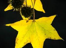 Φωτογράφος δημιούργησε ένα μοναδικό project με εικόνες κήπου που θα λατρέψετε!   - Κυρίως Φωτογραφία - Gallery - Video 13