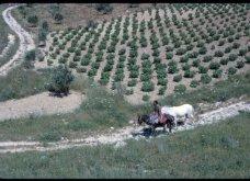 Διάσημη ιστοσελίδα του εξωτερικού παρουσιάζει vintage φωτό της Κρήτης από το 1970 - Κυρίως Φωτογραφία - Gallery - Video 20