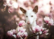 """Ποιες είναι οι νικήτριες φωτογραφίες στο διαγωνισμό """"Σκύλος της χρονιάς 2019""""; - Ιδού (φώτο) - Κυρίως Φωτογραφία - Gallery - Video"""