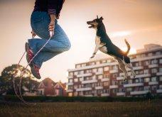 """Ποιες είναι οι νικήτριες φωτογραφίες στο διαγωνισμό """"Σκύλος της χρονιάς 2019""""; - Ιδού (φώτο) - Κυρίως Φωτογραφία - Gallery - Video 2"""