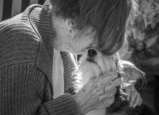 """Ποιες είναι οι νικήτριες φωτογραφίες στο διαγωνισμό """"Σκύλος της χρονιάς 2019""""; - Ιδού (φώτο) - Κυρίως Φωτογραφία - Gallery - Video 3"""
