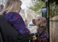 """Ποιες είναι οι νικήτριες φωτογραφίες στο διαγωνισμό """"Σκύλος της χρονιάς 2019""""; - Ιδού (φώτο) - Κυρίως Φωτογραφία - Gallery - Video 4"""