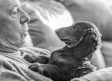 """Ποιες είναι οι νικήτριες φωτογραφίες στο διαγωνισμό """"Σκύλος της χρονιάς 2019""""; - Ιδού (φώτο) - Κυρίως Φωτογραφία - Gallery - Video 11"""