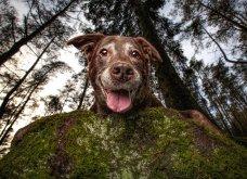 """Ποιες είναι οι νικήτριες φωτογραφίες στο διαγωνισμό """"Σκύλος της χρονιάς 2019""""; - Ιδού (φώτο) - Κυρίως Φωτογραφία - Gallery - Video 16"""
