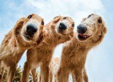 """Ποιες είναι οι νικήτριες φωτογραφίες στο διαγωνισμό """"Σκύλος της χρονιάς 2019""""; - Ιδού (φώτο) - Κυρίως Φωτογραφία - Gallery - Video 22"""