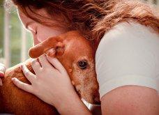 """Ποιες είναι οι νικήτριες φωτογραφίες στο διαγωνισμό """"Σκύλος της χρονιάς 2019""""; - Ιδού (φώτο) - Κυρίως Φωτογραφία - Gallery - Video 23"""