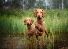 """Ποιες είναι οι νικήτριες φωτογραφίες στο διαγωνισμό """"Σκύλος της χρονιάς 2019""""; - Ιδού (φώτο) - Κυρίως Φωτογραφία - Gallery - Video 27"""