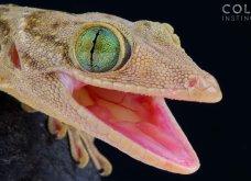 Σπάνια & συγκλονιστικά πορτραίτα ερπετών: Φίδια & σαύρες σε φωτογραφίες που θα κόψουν την ανάσα - Κυρίως Φωτογραφία - Gallery - Video