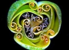 Ο θαυμαστός μικρόκοσμος της Nikon: 20 υπέροχες φωτογραφίες από ένα αόρατο σύμπαν που δεν φανταζόσουν ότι υπάρχει (φώτο) - Κυρίως Φωτογραφία - Gallery - Video