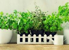 25 όμορφες ιδέες για να φυτέψετε βότανα & μυρωδικά σε γλαστρούλες ή κηπίσκους - Πράσινο & άρωμα στη ζωή σας (φώτο)  - Κυρίως Φωτογραφία - Gallery - Video 4
