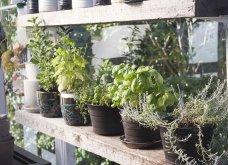 25 όμορφες ιδέες για να φυτέψετε βότανα & μυρωδικά σε γλαστρούλες ή κηπίσκους - Πράσινο & άρωμα στη ζωή σας (φώτο)  - Κυρίως Φωτογραφία - Gallery - Video 8