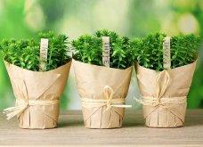 25 όμορφες ιδέες για να φυτέψετε βότανα & μυρωδικά σε γλαστρούλες ή κηπίσκους - Πράσινο & άρωμα στη ζωή σας (φώτο)  - Κυρίως Φωτογραφία - Gallery - Video 11