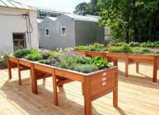 25 όμορφες ιδέες για να φυτέψετε βότανα & μυρωδικά σε γλαστρούλες ή κηπίσκους - Πράσινο & άρωμα στη ζωή σας (φώτο)  - Κυρίως Φωτογραφία - Gallery - Video 14