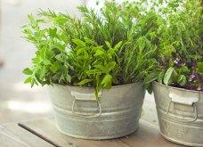 25 όμορφες ιδέες για να φυτέψετε βότανα & μυρωδικά σε γλαστρούλες ή κηπίσκους - Πράσινο & άρωμα στη ζωή σας (φώτο)  - Κυρίως Φωτογραφία - Gallery - Video 15