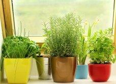 25 όμορφες ιδέες για να φυτέψετε βότανα & μυρωδικά σε γλαστρούλες ή κηπίσκους - Πράσινο & άρωμα στη ζωή σας (φώτο)  - Κυρίως Φωτογραφία - Gallery - Video 21