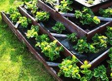 25 όμορφες ιδέες για να φυτέψετε βότανα & μυρωδικά σε γλαστρούλες ή κηπίσκους - Πράσινο & άρωμα στη ζωή σας (φώτο)  - Κυρίως Φωτογραφία - Gallery - Video 23
