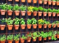 25 όμορφες ιδέες για να φυτέψετε βότανα & μυρωδικά σε γλαστρούλες ή κηπίσκους - Πράσινο & άρωμα στη ζωή σας (φώτο)  - Κυρίως Φωτογραφία - Gallery - Video 24