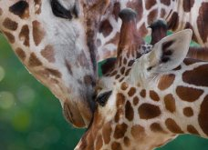 Καλλιτέχνης αποτυπώνει στιγμές αληθινής αγάπης στα ζώα - Φώτο  - Κυρίως Φωτογραφία - Gallery - Video