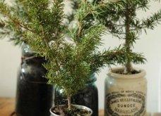 25 εκπληκτικές ιδέες για μικρά δένδρα Χριστουγέννων για σπίτια που δεν έχουν πολύ χώρο - Φώτο - Κυρίως Φωτογραφία - Gallery - Video 18