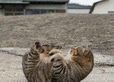 40 αδέσποτες γάτες με προσωπικότητα - Τις καταπληκτικές φωτό τράβηξε γνωστός Ιάπωνας φωτογράφος - Θα τις αγαπήσετε!  - Κυρίως Φωτογραφία - Gallery - Video 17