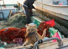 40 αδέσποτες γάτες με προσωπικότητα - Τις καταπληκτικές φωτό τράβηξε γνωστός Ιάπωνας φωτογράφος - Θα τις αγαπήσετε!  - Κυρίως Φωτογραφία - Gallery - Video 18