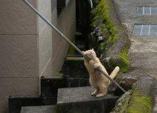 40 αδέσποτες γάτες με προσωπικότητα - Τις καταπληκτικές φωτό τράβηξε γνωστός Ιάπωνας φωτογράφος - Θα τις αγαπήσετε!  - Κυρίως Φωτογραφία - Gallery - Video 19