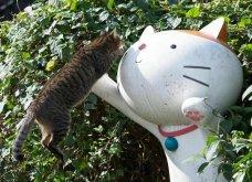 40 αδέσποτες γάτες με προσωπικότητα - Τις καταπληκτικές φωτό τράβηξε γνωστός Ιάπωνας φωτογράφος - Θα τις αγαπήσετε!  - Κυρίως Φωτογραφία - Gallery - Video 2