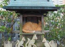40 αδέσποτες γάτες με προσωπικότητα - Τις καταπληκτικές φωτό τράβηξε γνωστός Ιάπωνας φωτογράφος - Θα τις αγαπήσετε!  - Κυρίως Φωτογραφία - Gallery - Video 4