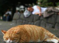 40 αδέσποτες γάτες με προσωπικότητα - Τις καταπληκτικές φωτό τράβηξε γνωστός Ιάπωνας φωτογράφος - Θα τις αγαπήσετε!  - Κυρίως Φωτογραφία - Gallery - Video 6