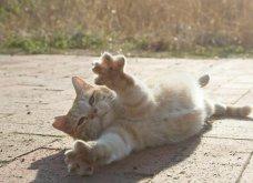 40 αδέσποτες γάτες με προσωπικότητα - Τις καταπληκτικές φωτό τράβηξε γνωστός Ιάπωνας φωτογράφος - Θα τις αγαπήσετε!  - Κυρίως Φωτογραφία - Gallery - Video 7
