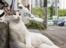 40 αδέσποτες γάτες με προσωπικότητα - Τις καταπληκτικές φωτό τράβηξε γνωστός Ιάπωνας φωτογράφος - Θα τις αγαπήσετε!  - Κυρίως Φωτογραφία - Gallery - Video 8