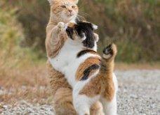 40 αδέσποτες γάτες με προσωπικότητα - Τις καταπληκτικές φωτό τράβηξε γνωστός Ιάπωνας φωτογράφος - Θα τις αγαπήσετε!  - Κυρίως Φωτογραφία - Gallery - Video 9