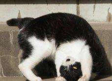 40 αδέσποτες γάτες με προσωπικότητα - Τις καταπληκτικές φωτό τράβηξε γνωστός Ιάπωνας φωτογράφος - Θα τις αγαπήσετε!  - Κυρίως Φωτογραφία - Gallery - Video 11