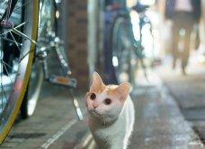 40 αδέσποτες γάτες με προσωπικότητα - Τις καταπληκτικές φωτό τράβηξε γνωστός Ιάπωνας φωτογράφος - Θα τις αγαπήσετε!  - Κυρίως Φωτογραφία - Gallery - Video 12